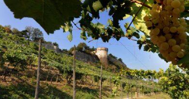 Le vigne sulle orme dei Longobardi: compie vent'anni la Strada dei Vini e dei Sapori